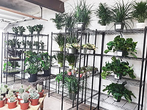 a variety of plants inside the silverbell nursery shop