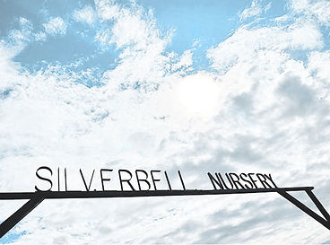 clouds with silverbell nursery sign
