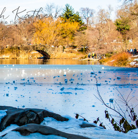 Central Park Duck Pond