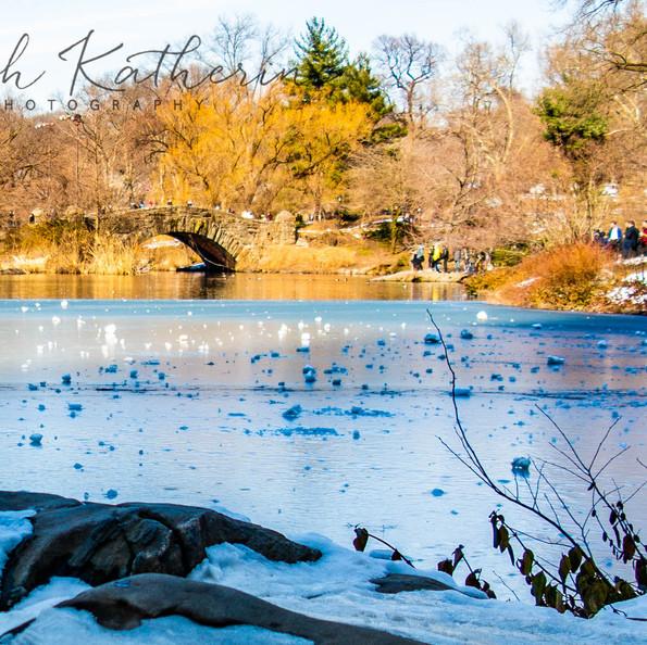 Central Park Duck Pond