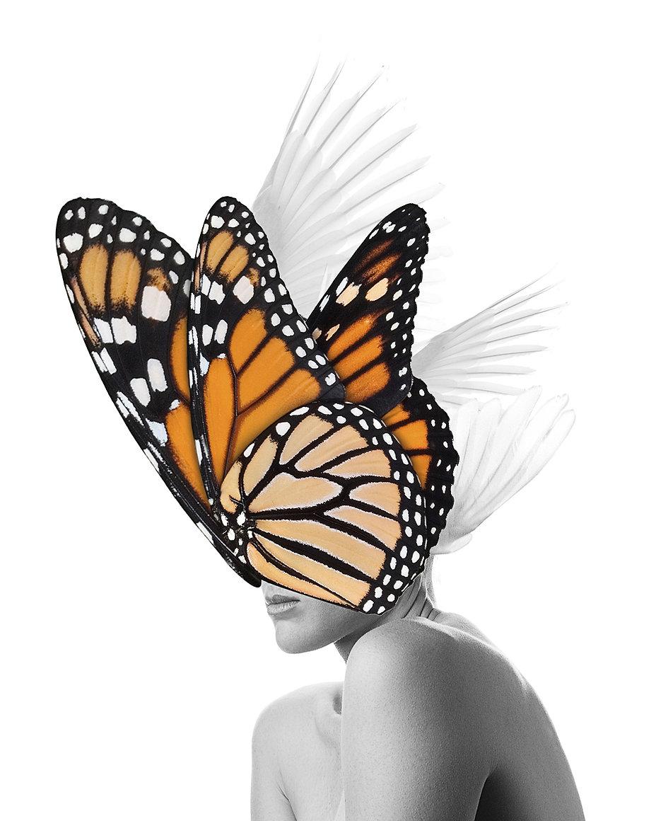 DSC_5330.butterfly.wings.jpg