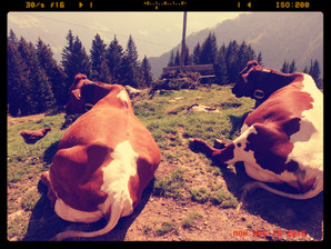 Navigieren in unsicheren Zeiten - the Art of Hosting 2016 in Alpbach