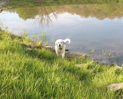 Puppy Cash at the pond