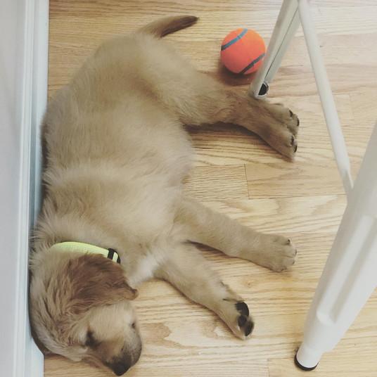 Bowdon takes so many puppy naps!