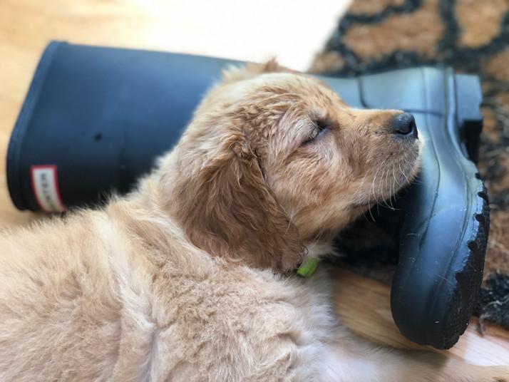 Play hard; nap harder!