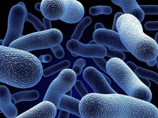 חיידקים בהגדלת מקרוסקופ