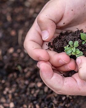 seedlings-3448883_640.jpg