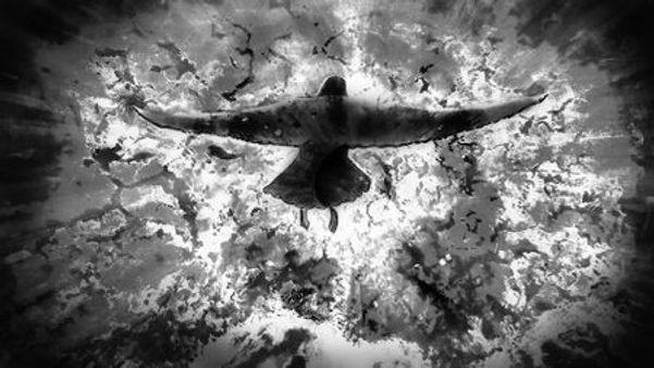 vogel zwart wit.jpg
