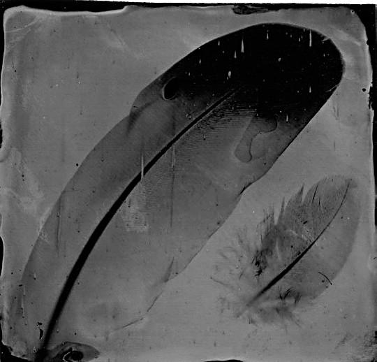 Collodion photogram