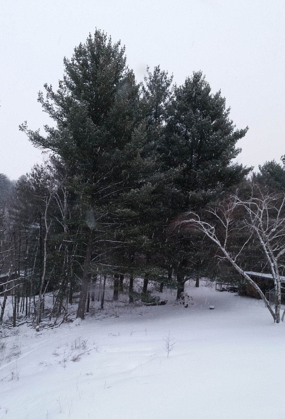 Winter 2015_edited.jpg