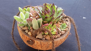 Coco cup of succulents.jpg