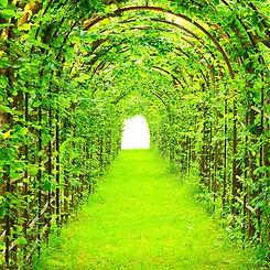 A garden path down an arch