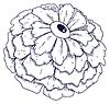 FloweyEye Logo-01.png