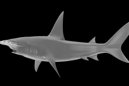 Great Hammerhead Predator 3D Printable Model
