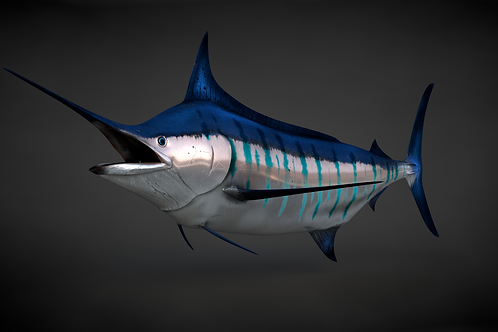 Blue Stripped Marlin V13 C4D Rigged