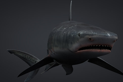 Tiger Shark 3D Model C4D Rigged