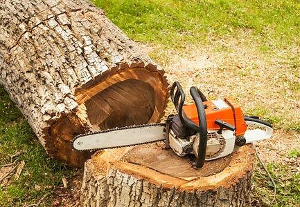 Felling_a_Tree.jpg