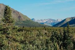 denali-national-park-cariibou-hike-landscape.jpg