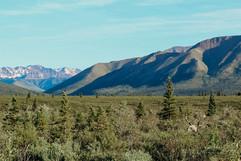 denali-national-park-caribou-hike-landscape.jpg