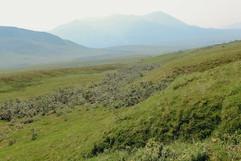 denali-national-park-landscape.jpg