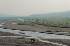 denali-national-park-caribou-landscape.jpg