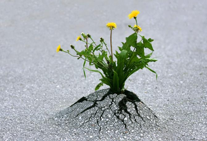 """Antifragilidade – """"fazendo diferente para fazer a diferença"""""""