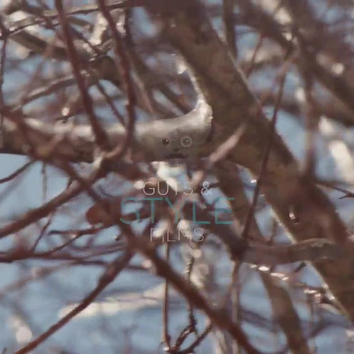 Winter Tree Pack