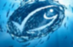 MSC per una pesca sostenibile e certificata