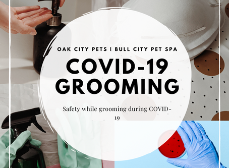 3 Easy Ways Your Groomer Stays Safe During COVID