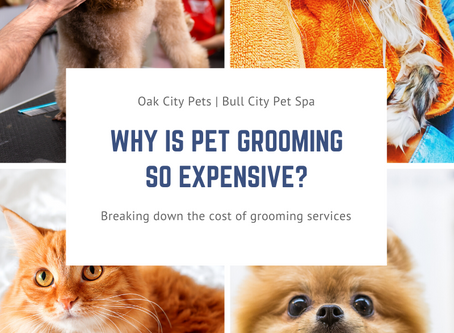 4 Valuable Reasons Why Pet Grooming Costs so Much