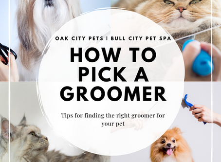 How to Pick a Groomer