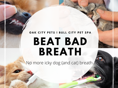 How to Easily Conquer Icky Dog (and Cat) Breath