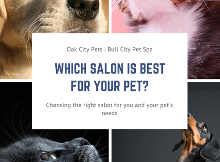 Which Salon Is Best For Your Pet?