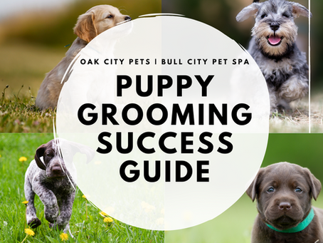 How To Set Your Puppy Up For Grooming Success