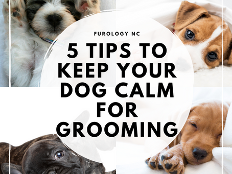 5 Tips to Keep Your Dog Calm for Grooming