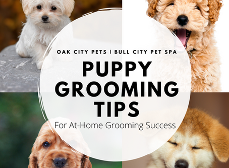 3 Simple Techniques You Need to Know for Puppy Grooming at Home