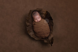 newborn photography rates in kochi