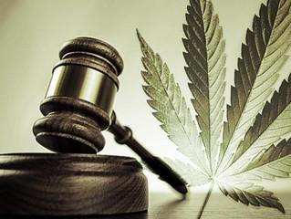 Marihuana medicinal, la realidad supera la legislación