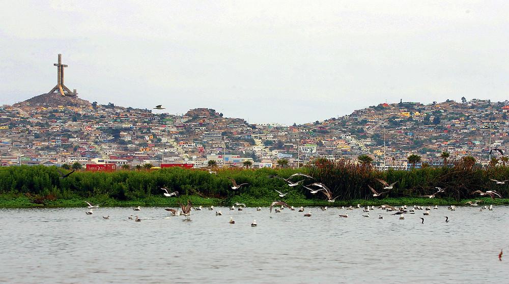 Humedal El Culebrón en Coquimbo