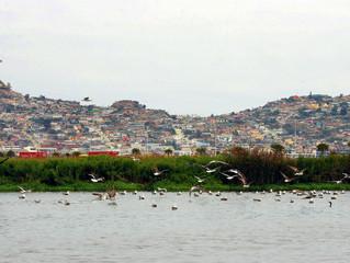 Diputado Raúl Saldívar (PS) presentó proyecto para proteger Humedal El Culebrón en Coquimbo