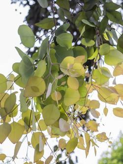 leaves-1_4web