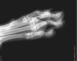 50 lb. Dog Paw