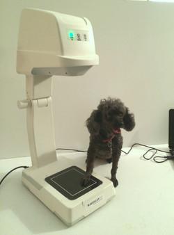 PortableX & Dog