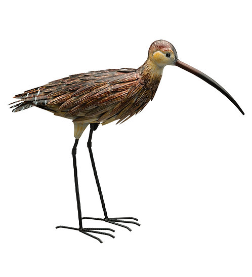 Curlew Up
