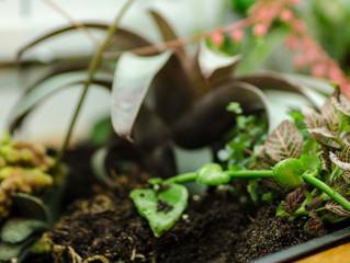 Planter til Torggata Botaniske
