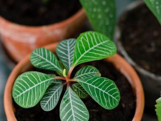 Plantebyttedag