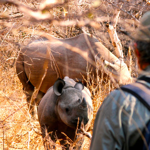 The Black Rhino of Matusadona