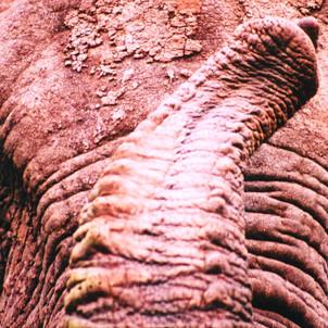 Gonarezhou - Place of Elephants