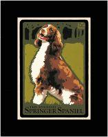 The Springer Spanial