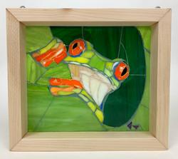 Red Eye Tree Frog